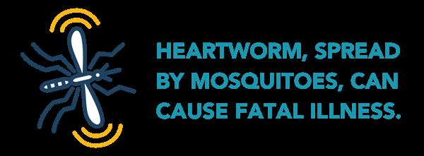 Heartworm Mosquito