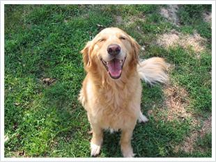 brown dog photo