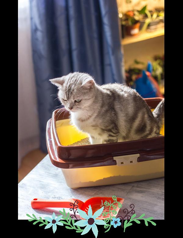 Cat sitting in litter box.